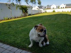 Landscaping: Winston's Garden