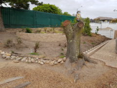 Riesling Str, SW: Stonehenge – Part 1 – Tree Felling